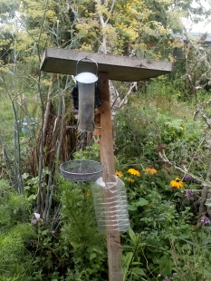 Black Niger seed attracts goldfinches. A plastic bottle on the wooden stand deters rats, much and squirrels from climbing up