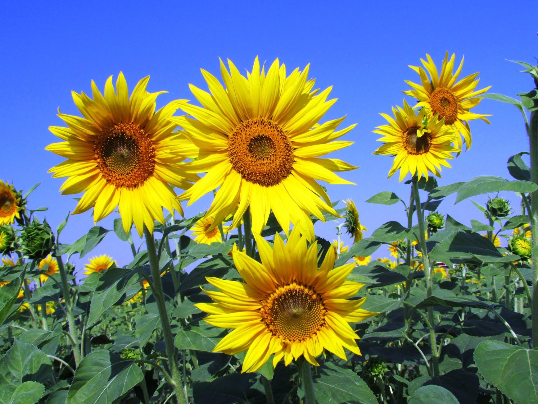 summer garden yellow petals
